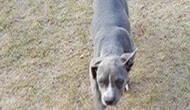Dog Kennel Gauteng