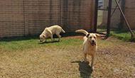 Dog Kennels Near Me