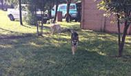 Dog Boarding Kennel